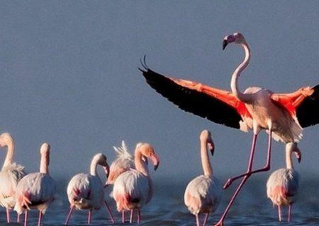 بهشت پرندگان احیاء میشود
