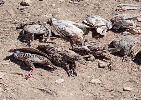 پای خشکسالی بر گلوی حیات وحش